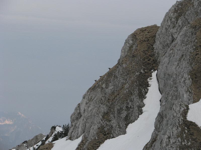 09-storzic